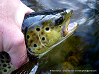 Clearwater_FlyFishing